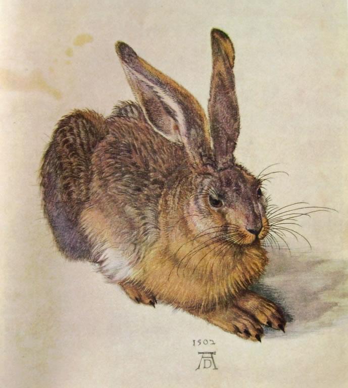 Albrecht Dürer: Leprotto
