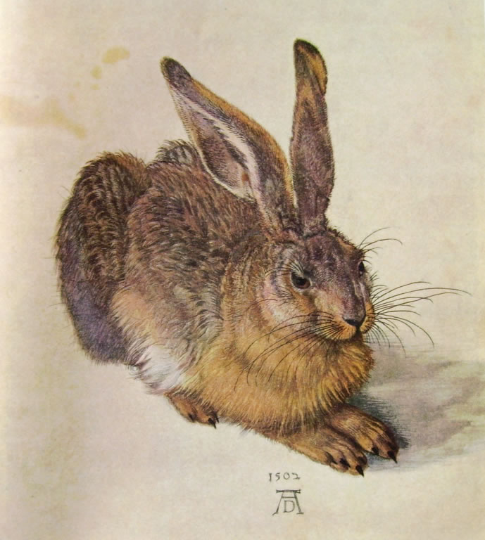 Albrecht Dürer: Leprotto (Vienna)