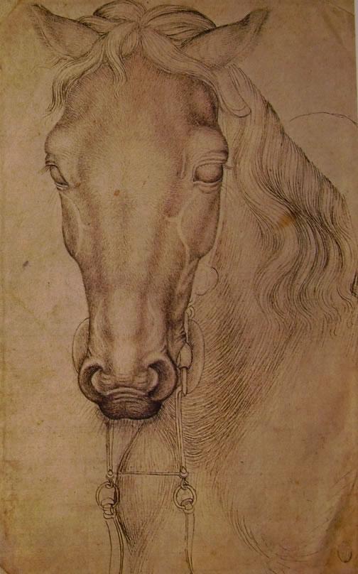 Pisanello: Testa di cavallo