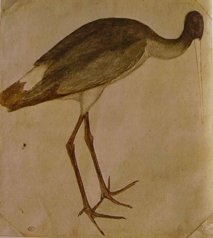 Cicogna del Pisanello