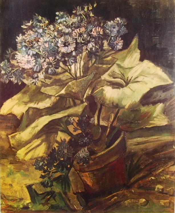 Vincent van Gogh:Pianta di cinerarie